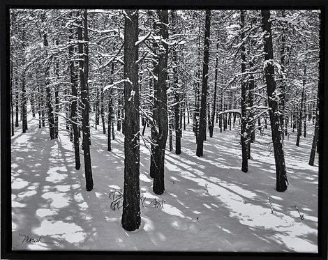 Puzzle, Malheur Trees in Snow