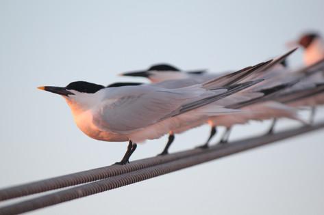 Birds Riding.JPG