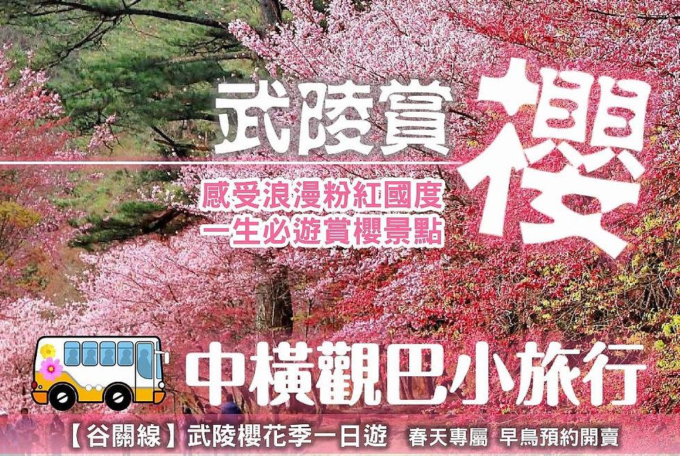 武陵賞櫻一日.jpg