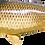 Thumbnail: Common Carp