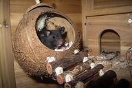hamster-1803421_960_720.jpg