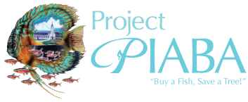 project-piaba-8dd9994f-0679-4dc2-9dea-2a