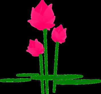 lotus-148879_960_720.png