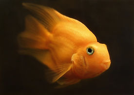 fish-2520814_960_720.jpg
