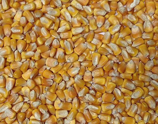 Whole Dent Corn (Non-GMO)