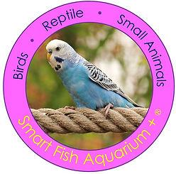 SEAL BIRD.jpg