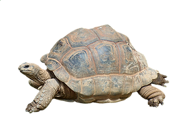 turtle-2815539_960_720.png