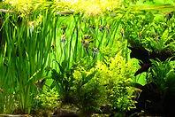 aquarium-5320392_960_720.jpg