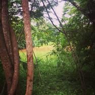 Jungle Trip Ameyali