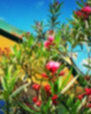 Flowers Kenya Donate Healthcare