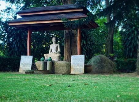 The Dipabhavan Meditation Retreat (From Striving to Thriving - Part 3)