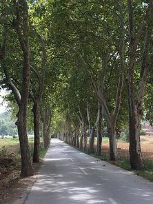 Low traffic road in Spain