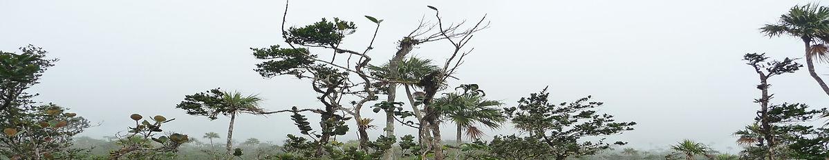 canopée, orchidées, forêt topicale