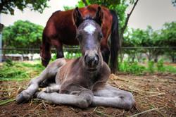 foal copy.jpg