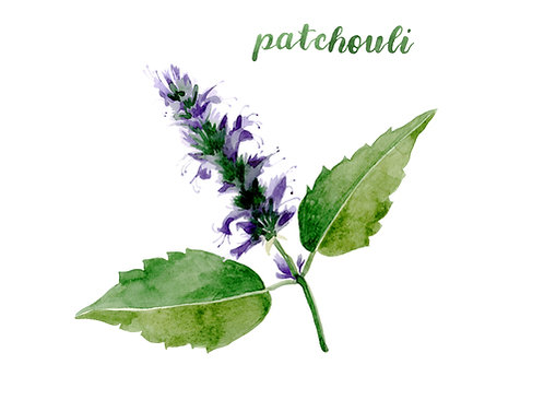 SEPTEMBER SPECIAL Patchouli 10ml