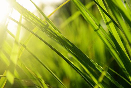 SEPTEMBER SPECIAL Lemongrass Organic 10ml