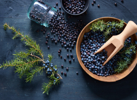Juniper 'Berry'...