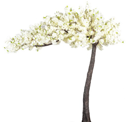 Blossom%20Tree_edited.jpg