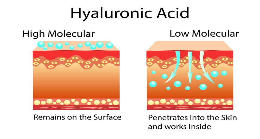 Hyaluronic Acid Illustration - Kellie Olver