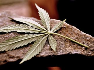 Does Marijuana Kill Brain Cells?*