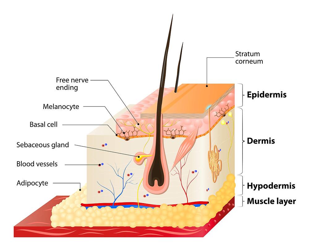Skin layers Kellie Olver