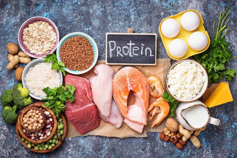 Animal Protein vs Plant Protein