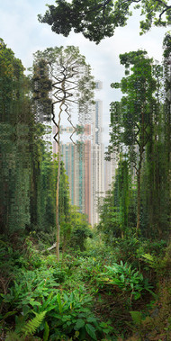 HONG KONG THE FOREST'S CALL - 2021
