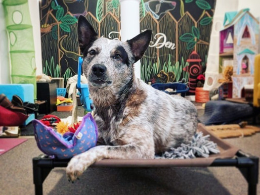 Pet Retailers See A Boost During The Pandemic