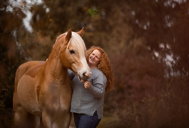 Hafliner, Hengst, Shooting mit Pferd, Pferdeshooting, Pferdefotograf, Tierfotografie
