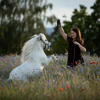 Shetty, Pferdefotograf, Shettland Pony, Pony, Pferdemädchen, Fotoshooting mit Pferd, Pferdefotografie, Pferdefoto, Rheinland-Pfalz, Zirzensik