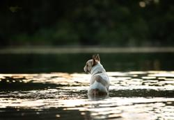 Französische Bulldogge, Bully, Frenchie, Tierfotograf, Hundefotografie, Tierfotografie, Fotograf, Ku