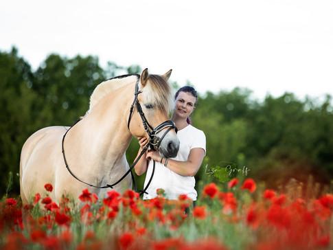 Norweger, Fotoshooting mit Pferd, Pferdefoto, Pferdefotograf, Pferdefotografie, Rheinland-Pfalz, Bad Dürkheim, Pferdeportrait
