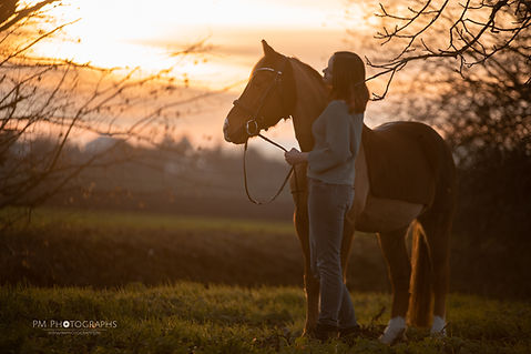 Fotograf, Tierfotograf, Hundefotograf, Pferdefotograf, Fotoshooting mit Pferd, Fotoshooting mit Hund, Deutsches Reitpony