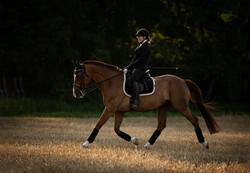 Reitbild, Dressurpferd, Dressurreiter, Pony, Dressurpferd, Trab, Mitteltrab, Hollsteiner, Tierfotogr