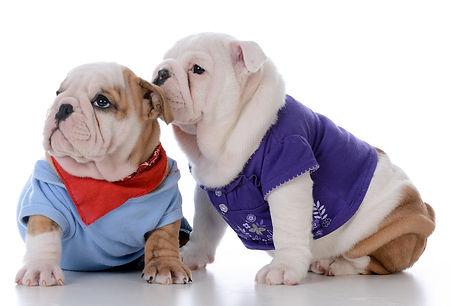 Dog Vet at Noble Vet Clinic in Dubai DIP