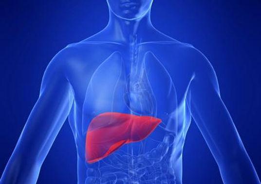 Il fegato oggi va in macchina