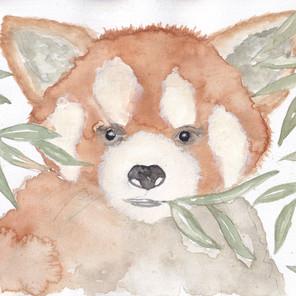 Day 16 – Red Panda