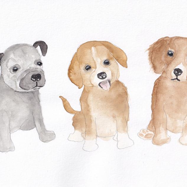 Day 12 – Puppy