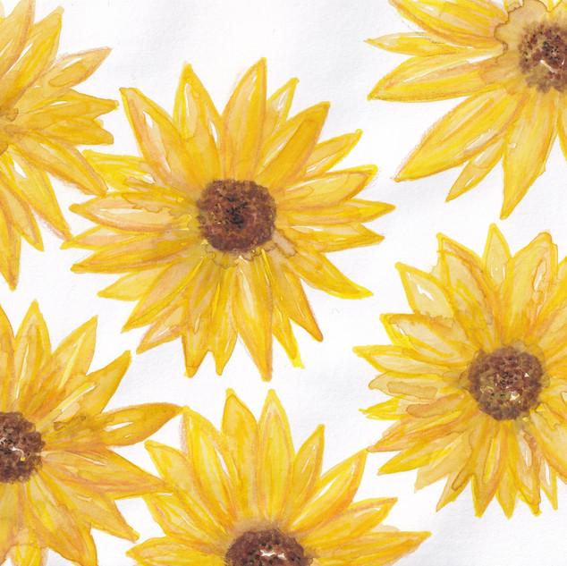 Day 5 – Sunflowers