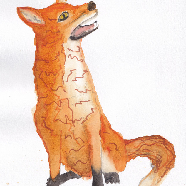 Day 7 – Fox