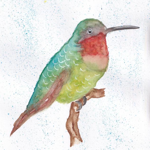 Day 1 – Hummingbird