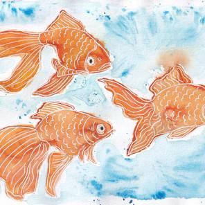 Day 27 – Goldfish