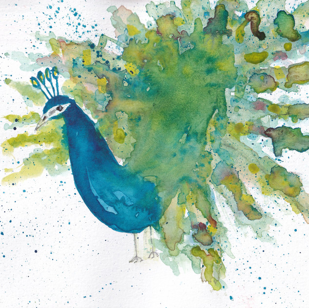Day 8 – Peacock