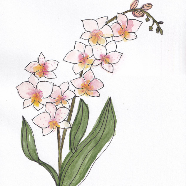 Day 3 – Orchids