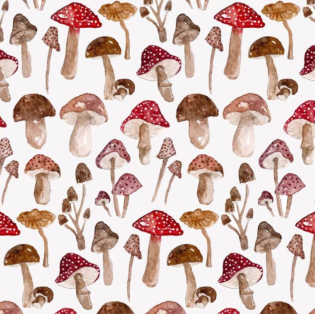 fungi-04.jpg