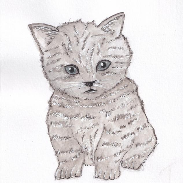 Day 22 – Kitten