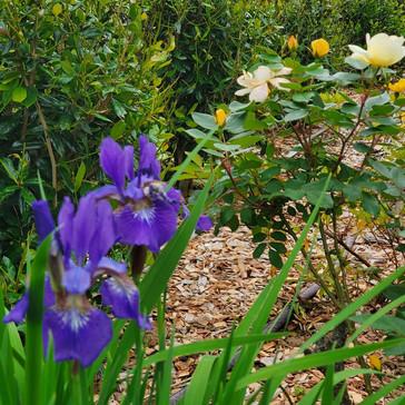 Summer's Acres is in full bloom!