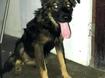 Esse cãozinho SRD, macho, com aproximadamente 02 anos, foi abandonado dentro de uma casa e o imóvel colocado para aluguel, no Vasco da Gama.   A casa foi alugada e os novos inquilinos querem colocá-lo na rua. Se você puder adotá-lo, entre em contato com o fone: (81) 9.8863.1916 (Thaís)