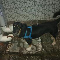 Bairros do Recife recebem bebedouros e comedouros para animais abandonados
