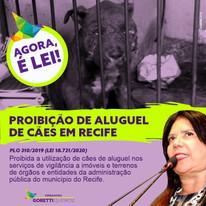 Agora é lei: Recife não terá mais aluguél de cães para serviço de vigilância